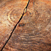 Weathered Wood On Old Tree Poster