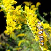 Webworm Moth Poster