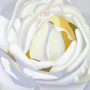 Wedding Rose Poster