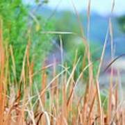 Weeds 033 Poster