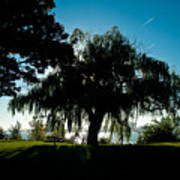 Weeping Willow Silhouette Poster
