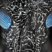 Weevil Beetle Under Microscope In Visible And Uv Light Poster