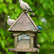 Welcome To My Bird Feeder Poster
