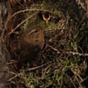Well Hidden Nest Poster