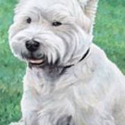 West Highland Terrier Poster