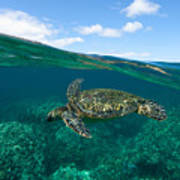 West Maui Green Sea Turtle Poster