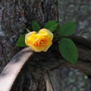 Western Yellow Rose II Poster