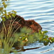 Wet Beaver Poster
