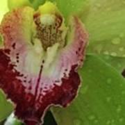 Wet Bloom Poster