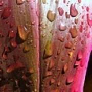 Wet Cordyline Leaf Poster
