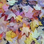Wet Fall Leaves Poster