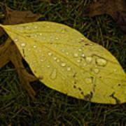 Wet Fallen Leaf Poster