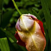 Wet Flower Poster
