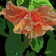 Wet Hibiscus Poster