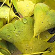Wet Yellow Leaves 2 Wc  Poster