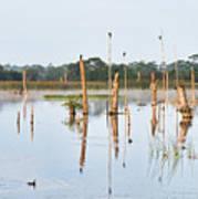 Wetlands At Sunrise Poster