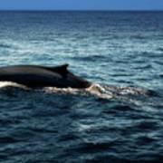 Whale Watching Balenottera Comune 6 Poster