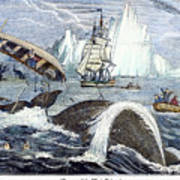 Whaling, 1833 Poster