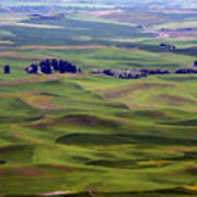 Wheat Fields Of The Palouse - Eastern Washington State Poster