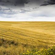 Wheat Fields With Storm Poster