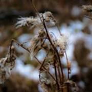 Whisp Of Winter Poster