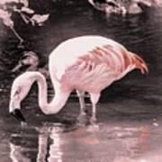 Whisper Pink Flamingo Poster