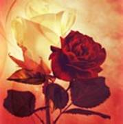 White And Red Roses Poster