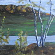 White Birch In The Landscape Poster