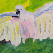 Pastel Feathered Cockatoo Poster