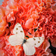White Butterfly On Pink Carnations Poster