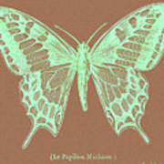 White Butterfly Swallow Tail Le Papillon Machaon Poster