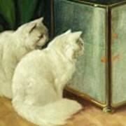 White Cats Watching Goldfish Poster