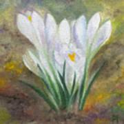 White Crocus Poster