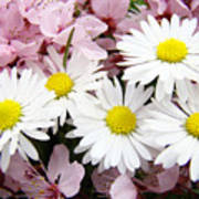 White Daisies Flowers Art Prints Spring Pink Blossoms Baslee Poster