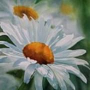 White Daisies Poster by Sharon Freeman