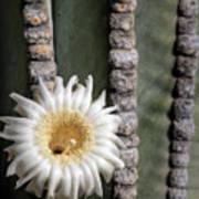 White Desert Jewel Poster