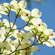 White Dogwood Flowers 1 Blue Sky Landscape Artwork Dogwood Tree Art Prints Canvas Framed Poster
