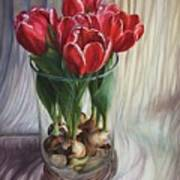 White-edged Red Tulips Poster