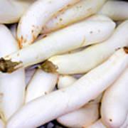 White Eggplants Poster