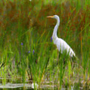 White Egret In Waiting Poster