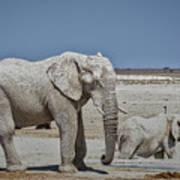 White Elephants Poster