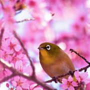 White Eye Bird Poster by masahiro Makino
