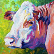 White Face Cow Poster