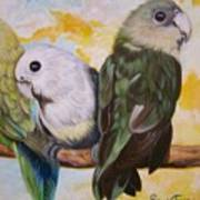 Chloe The    Flying Lamb Productions           White Faced Lovebirds Poster