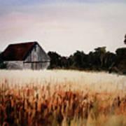 White For Harvest Poster