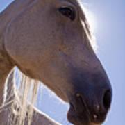 White Horse Poster