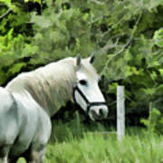 White Horse In A Green Pasture Poster