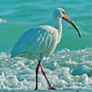 White Ibis Paradise Poster