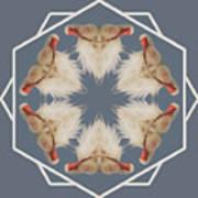 White Ibis Snowflake Poster