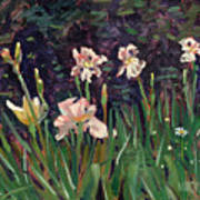White Irises Poster